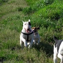 I nostri cani 003