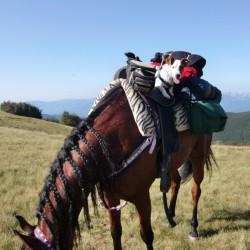 adesso vado a cavallo da solo