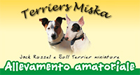 Allevamento Amatoriale Terriers Miska