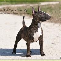 """Terriers Miska Orgoglio Nero Rap """"Turbo"""""""